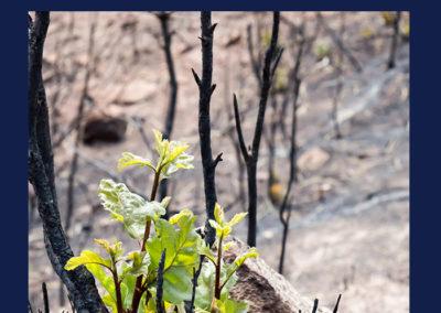 9528-Sophies-Knysna-Fires